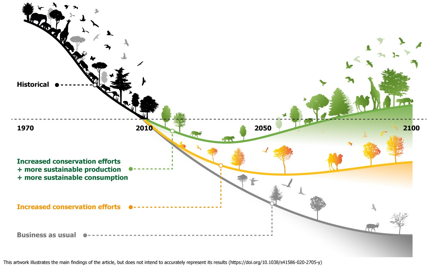 Artwork illustrating historical biodiversity loss curve before 2010 and different future loss curves depending on action taken.