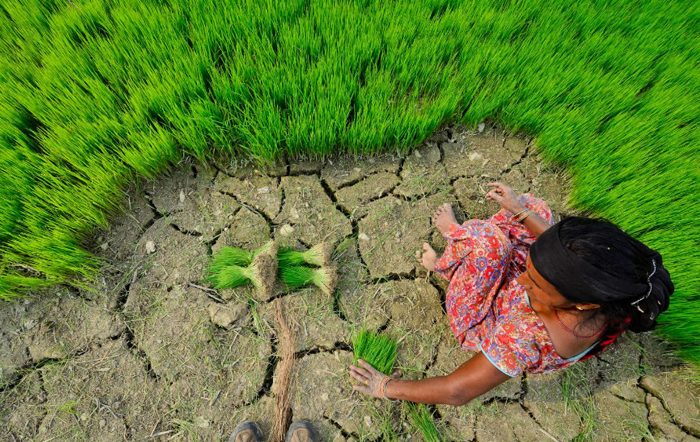 Rural asian agriculture: Photo: Neil Palmer via CIAT