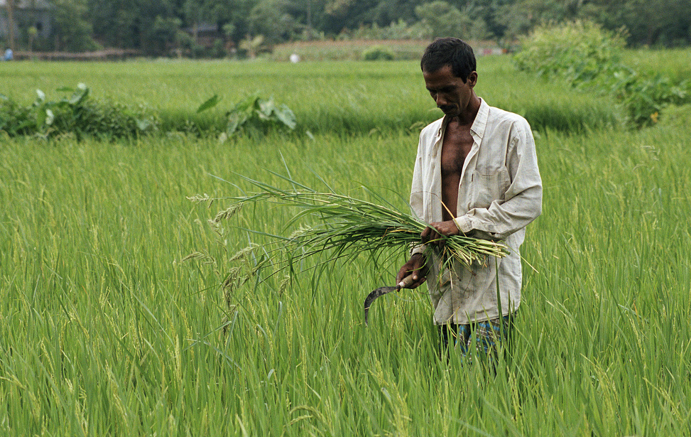 Photo: Flickr World Bank, a rice farmer in central Bangladesh CC BY-NC-ND 2.0